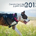 Canines with Cancer Wanted for 2015 Calendar