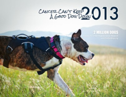 canine cancer calendar contest