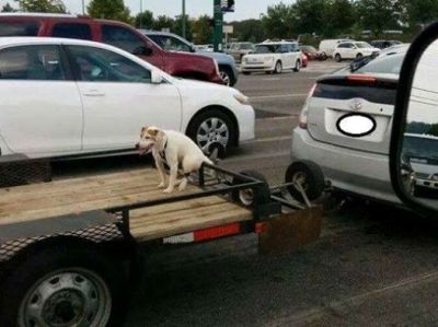 dog chained to trailer viral photo