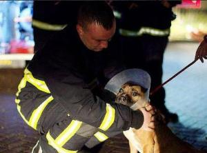 manchester dogs' home fire