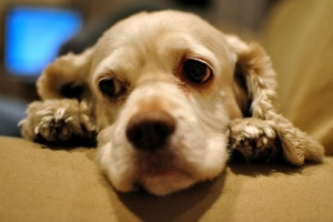 sad dog fbi to start tracking animal cruelty crimes