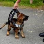 Ridiculously Cute Police Puppy in Training Photo Goes Viral