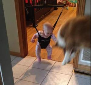 dog teaches baby to jump