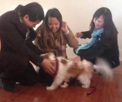 ebola free nurse reunites with dog