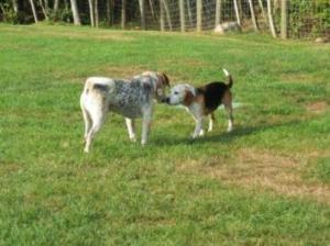 molly and buster blind dog and seeing-eye dog