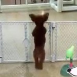 Happy Day Care Dog Puts 'Snoopy Dance' to Shame (VIDEO)