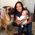 Days Later, Mastiff Who Rescued Baby Needed Rescuing Himself