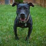 R.I.P. Gracie, Vick Dog Who Became Vicktory Dog