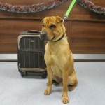 Adoption Requests and Donations Pour in for Dog Left with Suitcase at Train Station