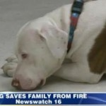 Rescued Pit Bull Saves Pennsylvania Family from House Fire