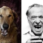 Viral 'Poetic Dogs' Photo Series Transforms Shelter Pups into Authors