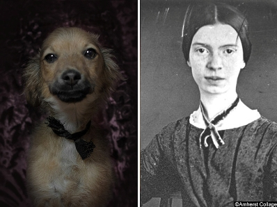 poetic dogs emily dickinson