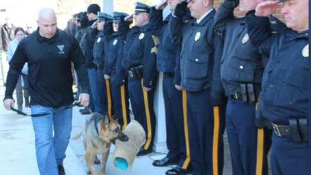 judge police dog saluted during final trip to vet