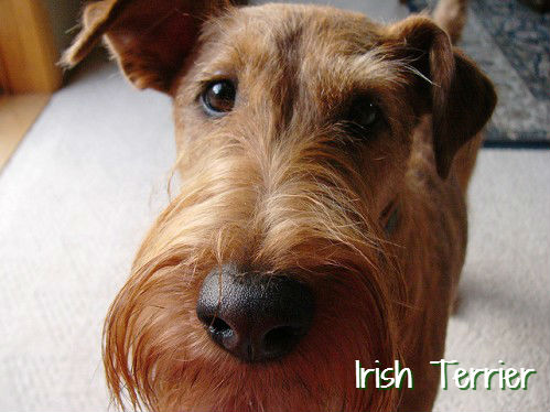 Grossest Dog Breeds