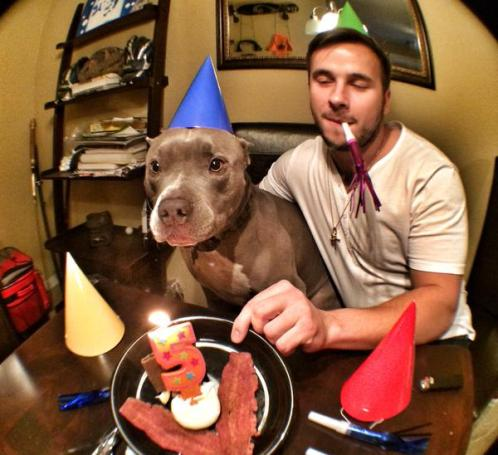 burberry pit bull killed by san diego police