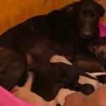 Dog Digs Hole to Save Puppies from Chile Forest Fire