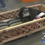 Home Depot Employees Build Custom Wagon for Dog with Cancer