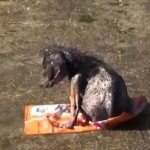 Abused Puppy Thrown in L.A. River Makes an Amazing Recovery (VIDEO)