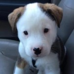 Puppy Tries to Attack His Hiccups and…Awww (VIDEO)