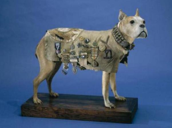 sergeant stubby in smithsonian