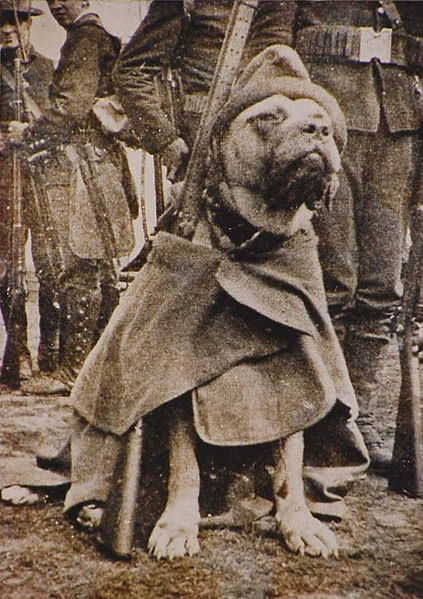 sergeant stubby wearing coat