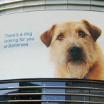 Dog on Electronic Billboards 'Follows' Shoppers to Encourage Adoptions