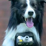 Border Collie 'Pho-dog-rapher' Snaps Pics with Heartbeat-Activated Camera