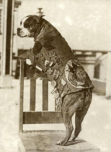 sergeant stubby standing