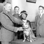 Sgt. Stubby, the Most Decorated US Military Dog, Would Be Banned from Bases Today