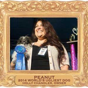world's ugliest dog 2014 winner peanut