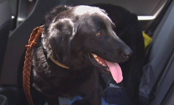 Zeva rescue dog saved owner from Texas flood