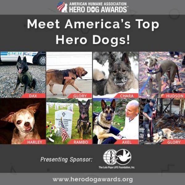 American Humane Association 2015 Hero Dog Awards