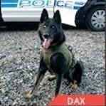 Dax Police Dog finalist AHA Hero Dog Awards