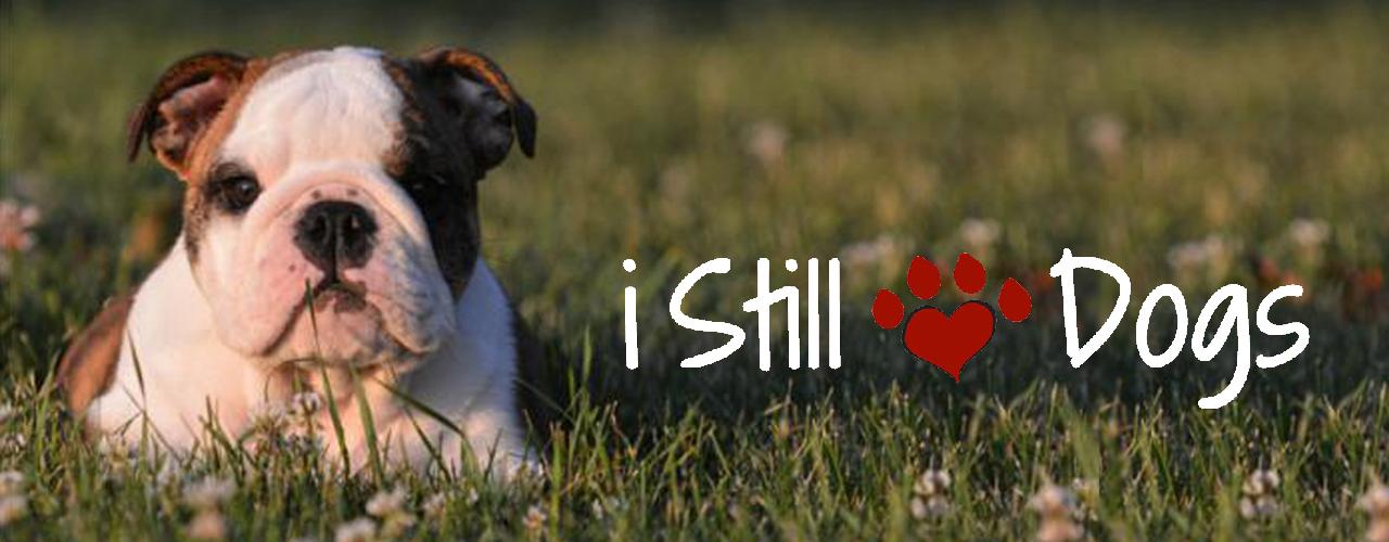 i Still Love Dogs