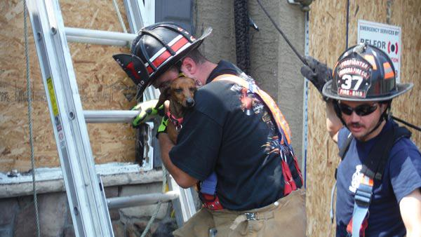 firefighter rescues dachshund day after house fire
