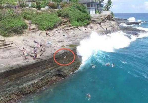 dog swept by wave into ocean hawaii