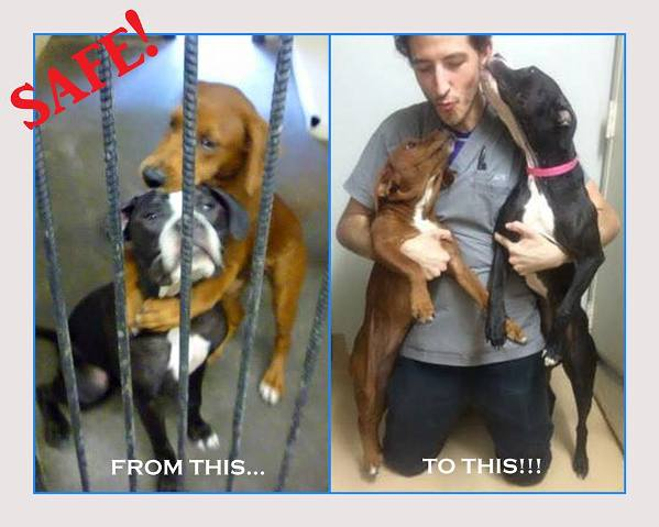 hugging shelter dogs adopted