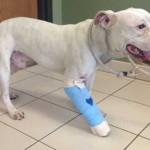 Milwaukee Man Shoots 'Mountain Lion' That's Really a Dog (He's OK)