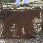 Three Poodles Survive Illinois House Explosion