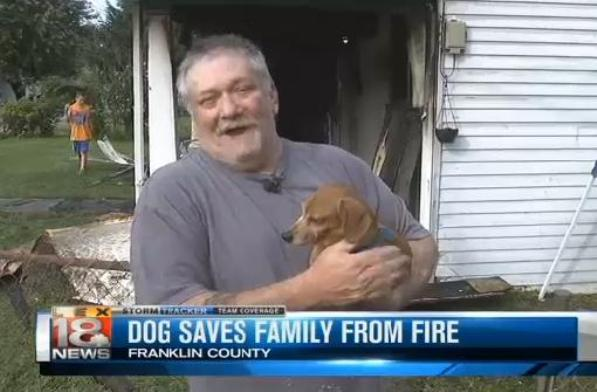 rescued dachshund saves family from fire