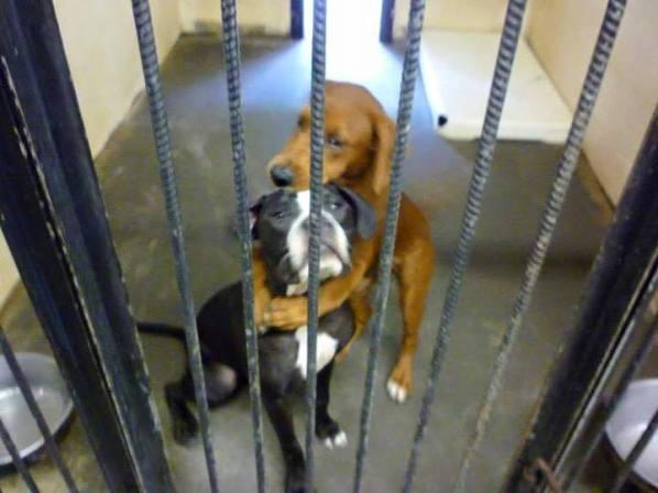 hugging shelter dogs kala keira