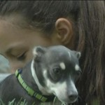 Burned Chihuahua Adopted by Family of Burn Survivor