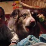 Australian Shepherd Shows Baby How to Say 'Mama' [Video]