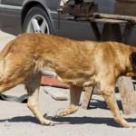 Pregnant Dog in Chile Nursed Malnourished Boy
