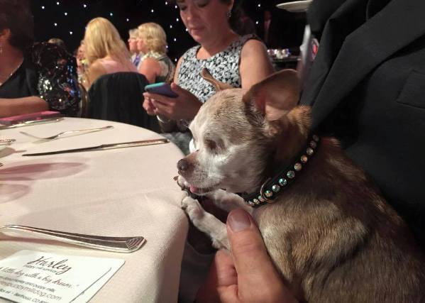 Harley 2015 American Hero Dog winner at dinner