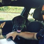 Virginia Police Officer Gives 2 Lost Dogs a Ride Home