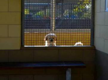 Losers Break Into 2 Animal Shelters Just To Harm Dogs