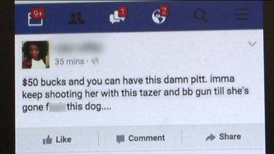 imma shoot my dog facebook post