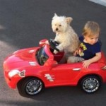 Miss Daisy Driving: Watch a Dog Chauffeur a Little Boy [Video]