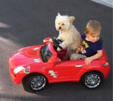 dog driving car with boy